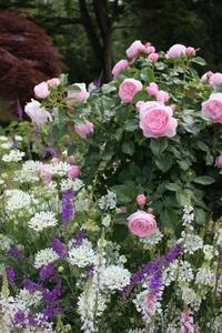 けな気な子達へのエール♪ - HOME SWEET HOME ペコリの庭 *