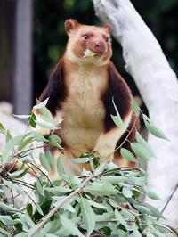 7月29日(土) 真夏のスパイラル - ほのぼの動物写真日記