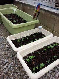 家庭菜園)プランター増加 - 下手の横好き 手芸と日々の出来事