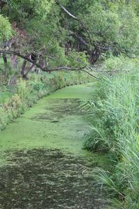 葛飾区水元公園で自然散策。。 - 一場の写真 / 足立区リフォーム館・頑張る会社ブログ
