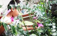 夏休みのモーニングセット - pink pinko life