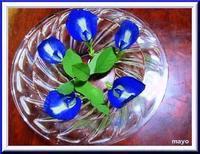 7/24 蝶豆っていうんだって~きれいな青色! - 行雲流水 のほほんほん