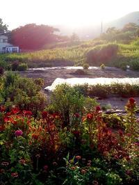 逆光の夕日のなかに浮かび上がった風景は | ダンジェネスの庭に向かって - 横須賀から発信 | プラス プロスペクトコッテージ 一級建築士事務所