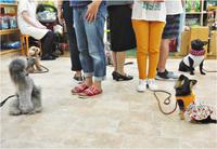 犬のしつけ方教室 7/28 - SUPER DOGS blog