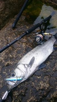 四国西南部 沖磯釣行 - Rock  Shore  Angler