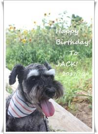 ジャックさん、9歳の朝。HappyBirthday! - ジャックジャックな日々!