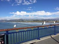 冬のビーチ、ニューブライトンと 国際南極センター - Coucou a table!      クク アターブル!
