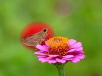 草花の咲く公園で虫などを - 星の小父さまフォトつづり
