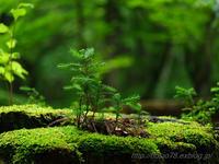 green tract of land - デジタルで見ていた風景