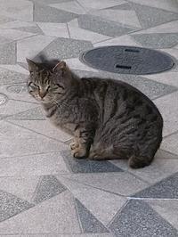 猫 - 心に残る風景と、、!
