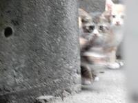 捕獲機待ち - 愛犬家の猫日記