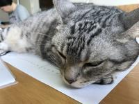 つり目ちゃん、不機嫌そうな顔もつり目ちゃん - ご機嫌元氣 猫の森公式ブログ
