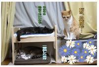 番外編!IKEAベッド劇場 - ぎんネコ☆はうす