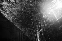キラキラの光りと、緑の中を散歩する至福 - Yoshi-A の写真の楽しみ