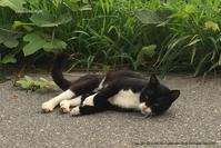 朝ランで出会ったノラニャン - エコ猫な人々