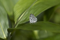 久しぶりの高山帯 ~クモマベニヒカゲ - チョウ!お気に入り