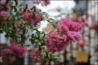 祇園祭後祭宵山 2 - Deep Season