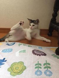 エルちゃん里親募集 - こもトク ~healing cats~