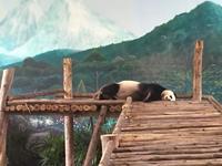 チェンマイ旅行@チェンマイ動物園 - ☆M's bangkok life diary☆