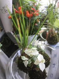 人気です!【苔玉】に涼をを求めて~ - ルーシュの花仕事