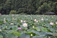 花はす公園 - 今日の空+α2