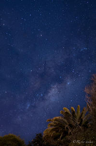 ニュージーランドの夜空《自宅庭から》 - 息子とカメラとどこ行こう!
