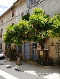 St Remi de Provence  June 2014 - Chaton の ひとりごと