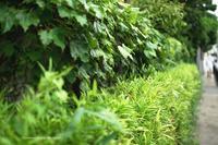 鎌倉 扇ガ谷の小径--自由散歩@撮影 - くにちゃん3@撮影散歩