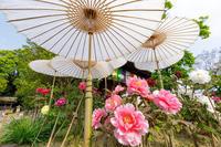 牡丹の寺 乙訓寺 - 花景色-K.W.C. PhotoBlog
