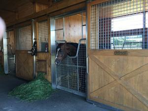"""第334回目は第49回札幌記念勝ち馬""""トウケイヘイロー""""です。 - 引退馬の牧場訪問写真記"""