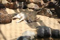 暑さ吹き飛ぶ可愛さ - 動物園のど!