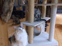 ガルシア=マルケス「この村に泥棒はいない」 - ネコと文学と猫ブンガク