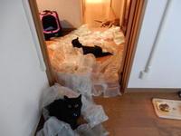 猫子供たちとおニュー洗濯機 - 愛犬家の猫日記