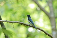 鳥風景・・! - さすらいの写遊人