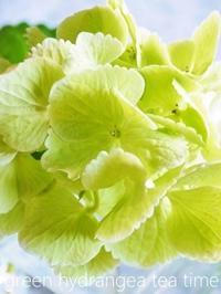 爽やかグリーンの紫陽花と焼き菓子 - serendipity blog