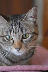 チビ太とお話し・小梅編 - Black Cat Moan