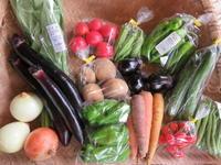 今週の野菜セット 7月5週目 - まるみど農園のあれこれ日記