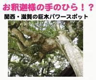 お釈迦様の手のひらのような珍しい巨木 - ありがとう