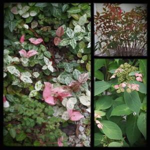 夏の庭 -