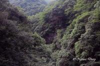20170717 県南の散歩道:キリシマミドリシジミが飛ぶ峪にて - NATURE DIARY