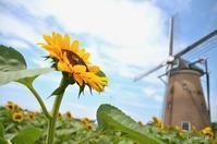 ひまわりと風車 - GreenLife