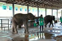 2017夏 スリランカの旅 ピンナワラのゾウの孤児院 - 明日はハレルヤ in Bangkok