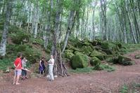 ラヴェルナの聖なる森と野の花たち、聖ヨハネの草とユリ - イタリア写真草子 - Fotoblog da Perugia
