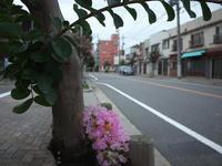 花咲く街角 170730 - LOOSE