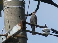 新しいカメラで♪ - 西多摩探鳥散歩