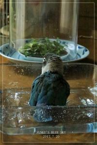 水浴びB.Bの記録 → (7月20日・っていうか、撮れてない~~、、、) - FUNKY'S BLUE SKY