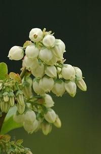 小さな畑は花いっぱい - 空ヤ畑ノコトバカリ
