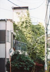 亀戸線散歩~東あずま駅から亀戸駅 2 - 散歩日和