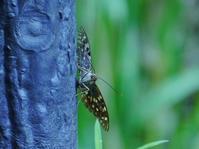 国蝶のオオムラサキを発見! - 花と葉っぱ