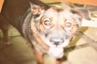 約20年前の8月4日*愛犬の命日 - 想い出